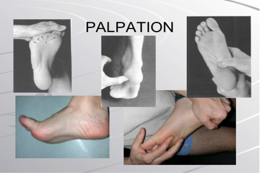 palpation pied